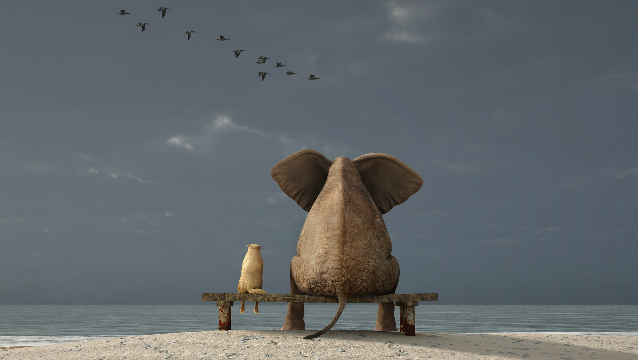 Elephant Staring Out into Ocean