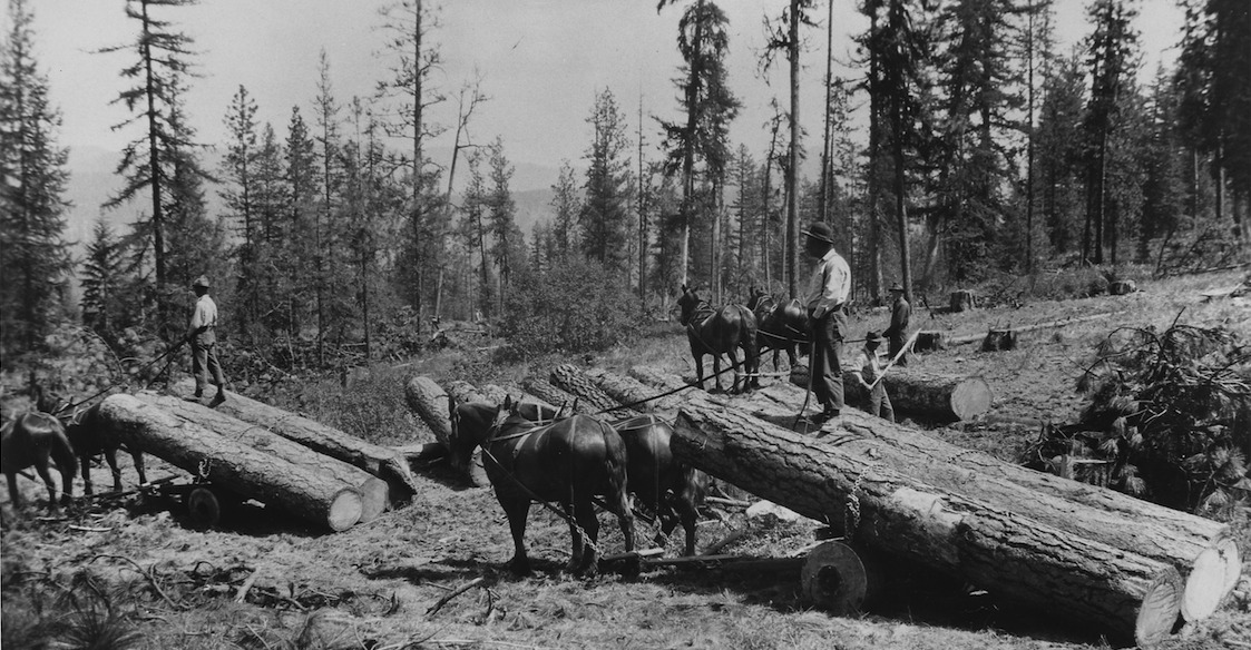 Ladd_photo_of_horse_skidding_of_logs_on_the_Moses_Mountain_logging_unit._For_skindding_to_landings_along_the_railroad..._-_NARA_-_298697