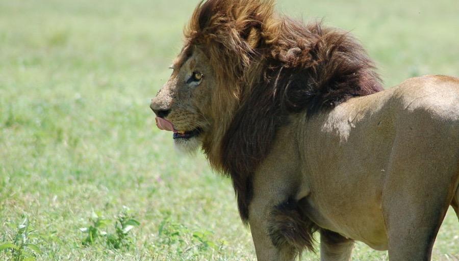 1280px-Ngorongoro_Crater,_Tanzania_(2288742082) (1)