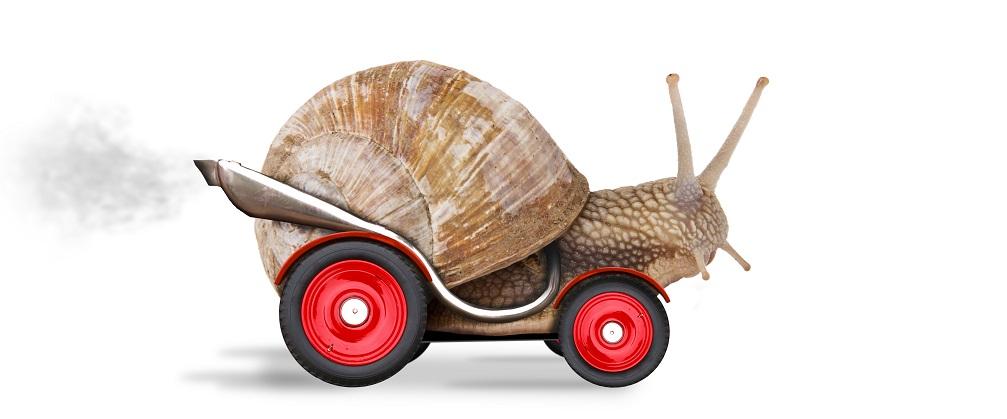 snailfeature